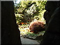 NS5367 : Through the rocks at the Fossil Grove rock garden by Darrin Antrobus