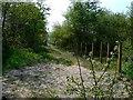 NS3686 : Footpath by George Rankin