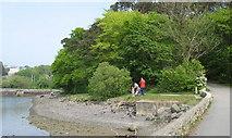 SH5571 : Feeding the ducks near Church Island causeway by Eric Jones