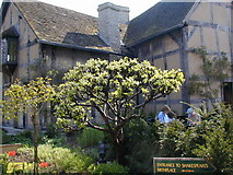 SP2055 : Shakespeare's birthplace Henley Street by Chris Gunns