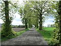 NO2437 : Approach to Balgrove by James Allan