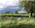 NU1012 : A field at Garmintedge Bank by Walter Baxter