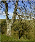 SU1070 : Avebury Henge by Chris Gunns