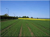 SE6350 : Hedge Bounding Field Lane by DAVID JOHN SHERLOCK