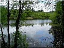 NX4465 : Bruntis Loch in Kirroughtree Forest by Iain Thompson