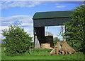 NY4862 : Farm Shed by wfmillar