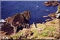 HU4008 : Coastline, birdlife and wild flowers, Sumburgh Head by Ruth Sharville