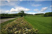 NS3478 : Hedgerow by George Rankin