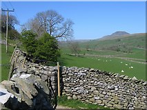 SD8167 : Walls and Fields above Little Stainforth by John S Turner