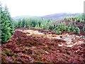 NN9346 : Stream Valley, Griffin Forest by Robert Bone