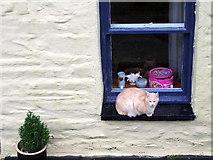 SN0729 : Cat on windowsill by ceridwen