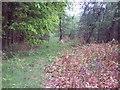 SU1012 : Woodland path near Daggons by Maigheach-gheal