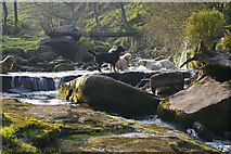 SD9628 : Enjoying the water at Hebble Hole, Colden Clough by Phil Champion