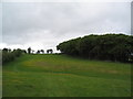SO2958 : Small oak wood on side of Bradnor Hill by Tim Heaton