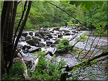 SX7489 : River Teign: Fingle Mill Head Weir by Nigel Cox