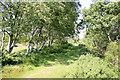 SY8186 : Footpath to Knighton Heath by Stuart Cankett