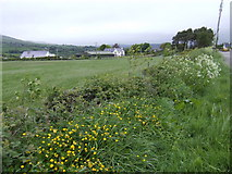 S8953 : Roadside wild flowers by Jonathan Billinger