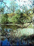 NJ5429 : Pond at Leith Hall by Andrew Stuart