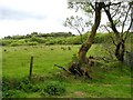 H1072 : Towlaght Townland by Kenneth  Allen
