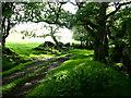 SH7919 : Woodland footpath by liz dawson
