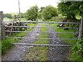 SH7819 : Gate and track by liz dawson