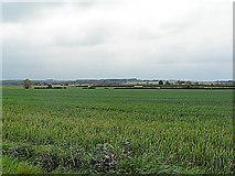 TF3686 : Stewton by Ian Carrington