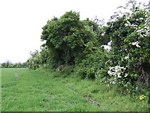 O1071 : Hedgerow east of the R108 near Calliaghstown by Jonathan Billinger