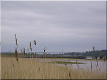 NS4273 : Reeds by the Clyde by Stephen Sweeney