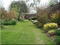 SO4465 : Spring borders at Croft Castle by Trevor Rickard