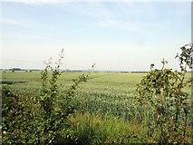 TL2657 : Field opposite Leycourt Farm. by Jeff Tomlinson
