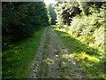NS1882 : Blairmore Farm - Kilmun Track by william craig
