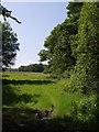 SX3279 : Field and trees near Trewarlett by Derek Harper
