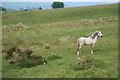 SO0310 : Horse on rough pasture by Doug Lee