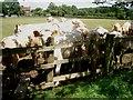 SO9171 : Bullocks near Little Durrance Farm by Trevor Rickard