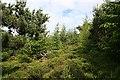 NJ3742 : Scug Wood by Anne Burgess