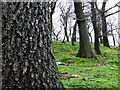 SS8593 : Woodlands in Dyffryn. by Jamie Murphy