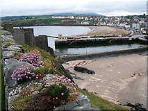 SC2484 : Peel Bay from the castle walls by Chris Gunns