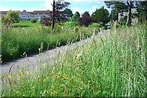 TQ8335 : Benenden Hospital from Green Lane by Anthony Eden