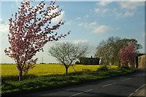 SE3513 : Rape Fields at Notton Grange by John Haig
