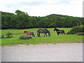 SO6820 : Grazing land at Boxbush by Pauline E