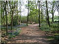 SP2973 : Seats in Crackley Wood by E Gammie