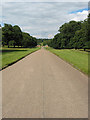 SP3518 : Cornbury Park - the drive to the NE exit by Pauline E