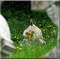 TR2264 : A goldfinch in Chislet churchyard. by david mills