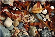 SW5031 : Pebbles on a Cornish beach by Mari Buckley