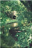 ST6601 : Cerne Abbas: the river Cerne by Chris Downer