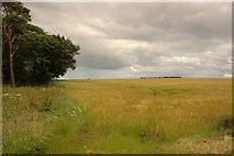 NH8480 : Fields by Steven Brown