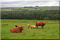 NY7262 : Highland cattle by Helen Wilkinson