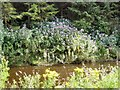 SJ8264 : River Dane by David C Brown