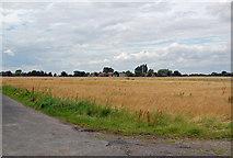 SE8317 : Looking towards Luddington by David Wright
