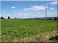 SO6832 : Potato crop nr Tillers' Green by Pauline E